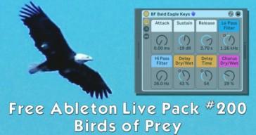 Birds of Prey by AfroDJMac